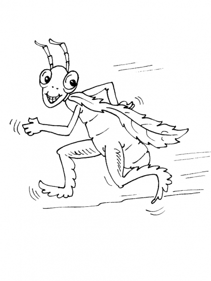 Coloriage Insecte 28