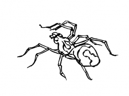 Coloriage Insecte 3