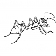 Coloriage Insecte 5
