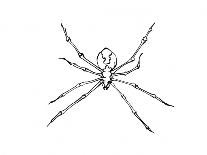 Coloriage Insecte 6