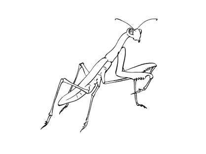 Coloriage Insecte 8