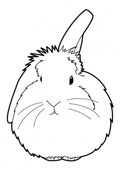 Coloriage lapin 10 coloriage lapins coloriage animaux - Coloriages lapins ...