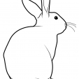 Coloriage Lapin 14