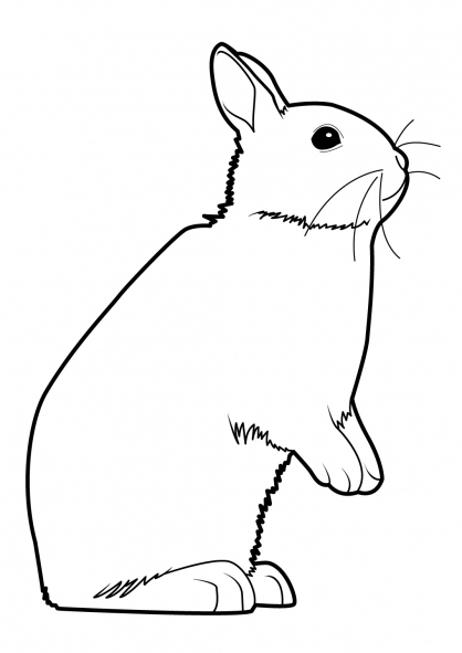 Coloriage Lapin 16