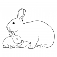 Coloriage Lapin 6