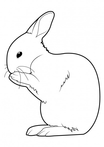 Coloriage lapin 7 coloriage lapins coloriage animaux - Coloriages lapins ...