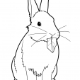 Coloriage Lapin 8