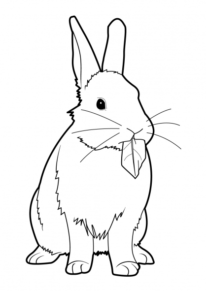 Coloriage lapin 8 coloriage lapins coloriage animaux - Coloriages lapins ...