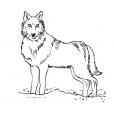 Coloriage Loup 1