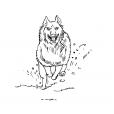 Coloriage Loup 11