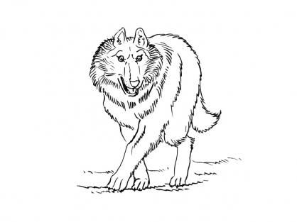 Coloriage Loup 12