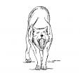 Coloriage Loup 13
