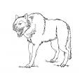 Coloriage Loup 14
