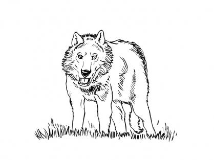 Coloriage Loup 15