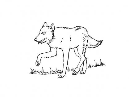 Coloriage Loup 3
