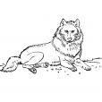 Coloriage Loup 5