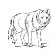 Coloriage Loup 6