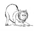 Coloriage Loup 7