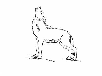 Coloriage Loup 8
