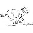 Coloriage Loup 9