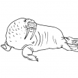 Coloriage Mammifère marin 10