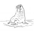 Coloriage Mammifère marin 11