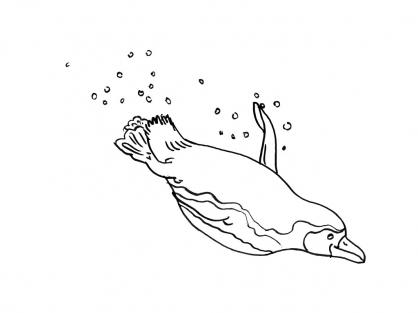 Coloriage Mammifère marin 13