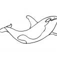 Coloriage Mammifère marin 14