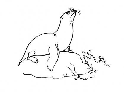 Coloriage Mammifère marin 2