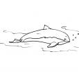 Coloriage Mammifère marin 4