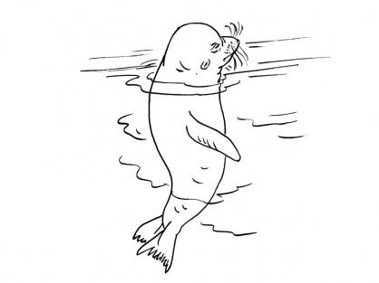 Coloriage Mammifère marin 6