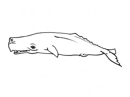 Coloriage Mammifère marin 8