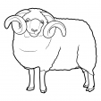 Coloriage Mouton 1