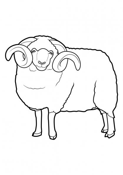 Coloriage mouton 1 coloriage moutons coloriage animaux - Dessin mouton ...