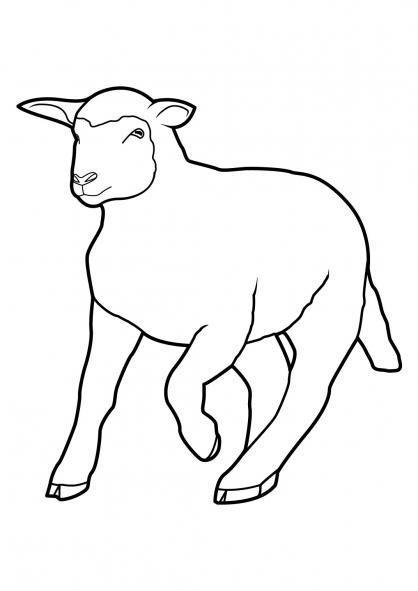 Coloriage Mouton 10