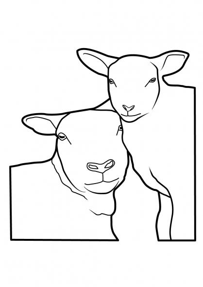 Coloriage Mouton 11