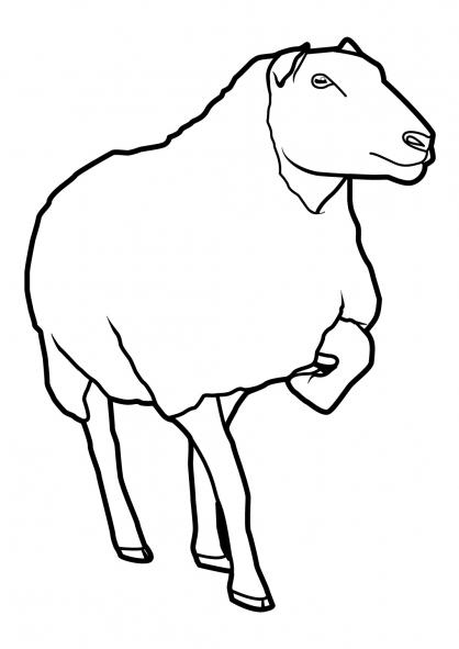 Coloriage Mouton 12