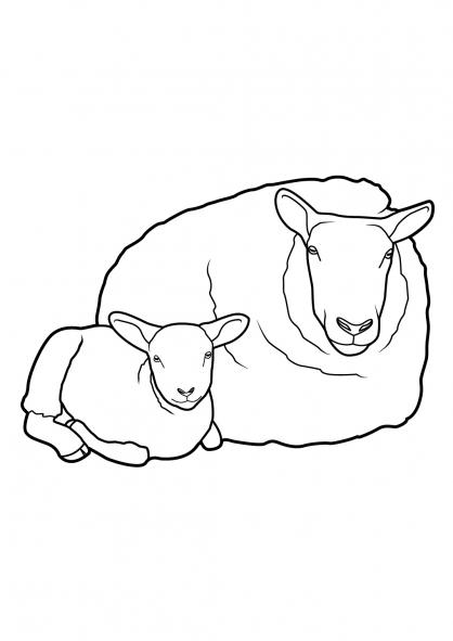 Coloriage Mouton 13