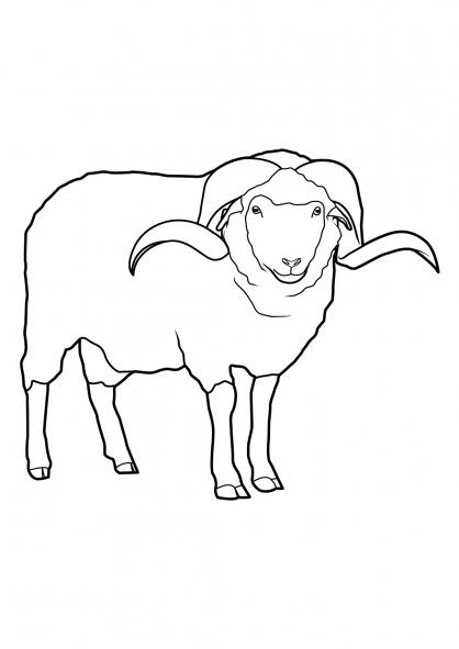 Coloriage Mouton 14
