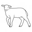 Coloriage Mouton 15
