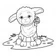 Coloriage Mouton 16
