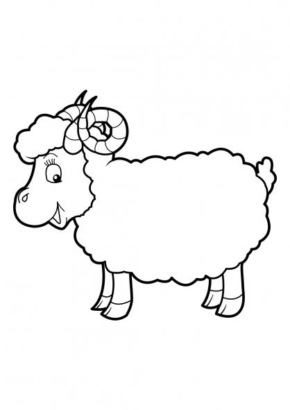 Coloriage Mouton 17