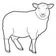 Coloriage Mouton 3