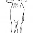 Coloriage Mouton 4