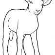 Coloriage Mouton 5