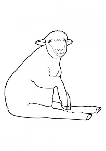 Coloriage Mouton 6