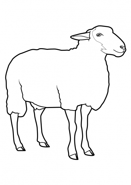 Coloriage Mouton 7