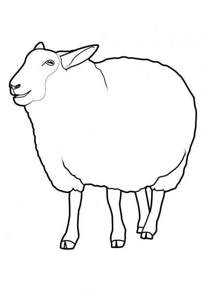 Coloriage Mouton 8