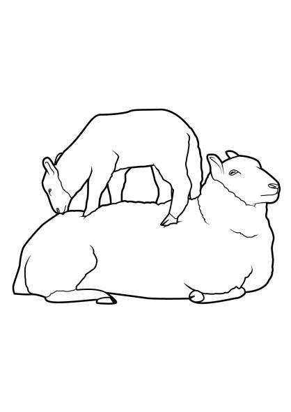 Coloriage Mouton 9