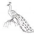 Coloriage Oiseau 11